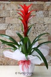 Flowers 1320