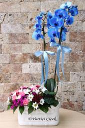 Flowers 2330