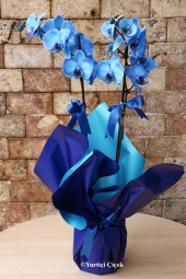 Flowers 3070