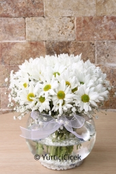 Flowers 2560